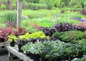 Perennials - CSWN Leesburg