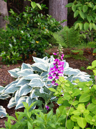Benefits of Native Plants Northern Virginia - Country Springs