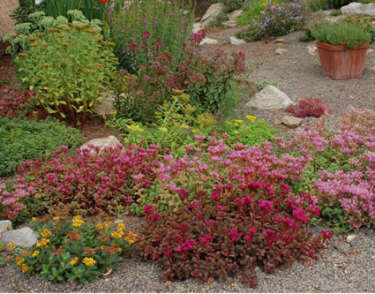 xeriscaping-small
